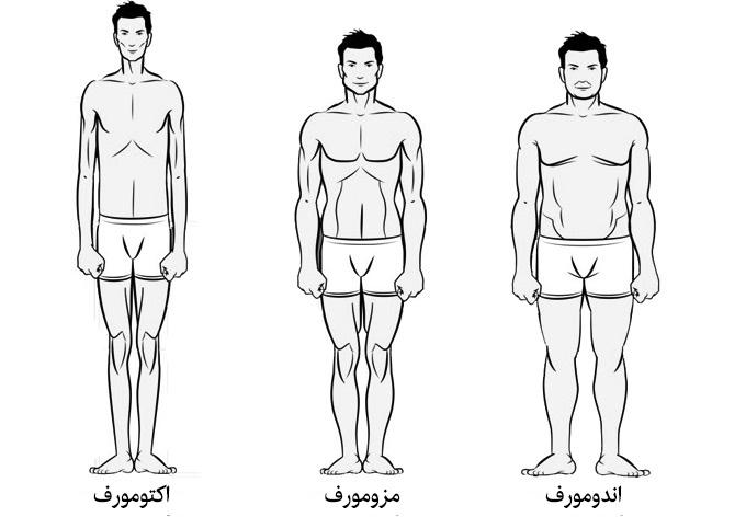 body types بحداکثر رساندن عضله سازی در هر تیپ بدنی